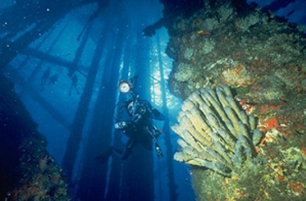 Rigs lack the biologic diversity of natural reefs. Guidelines for Marine Artificial Reef Materials.  Atlantic & Gulf States Marine Fisheries Commission, Jan. 2004